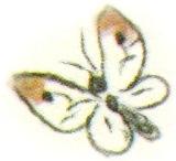 http://mopppoppp.moy.su/--zhksr--/BAshMA/babochka.jpg