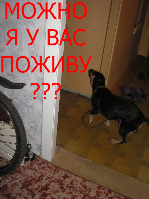 http://mopppoppp.moy.su/-rddrec-/-1-/-vzaf/-1.jpg